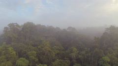 Rising up over the misty rainforest canopy at dawn. Stock Footage