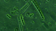 Bacteria Colony On Moss Plants Microscopic View Stock Footage