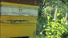 Stock Video Footage of Apiary