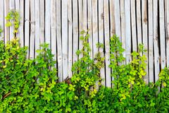 Green leaf border on bamboo panel background Stock Photos