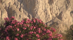 Greece, Mountain Sunset with red flowers , A hot summer day on island Stock Footage