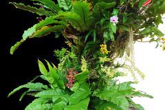 Stock Photo of exotic vegetation