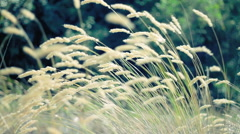 Wild plants on breezy summer day Stock Footage