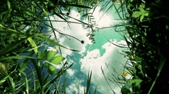 view of clouds in the sky through the green grass - stock footage