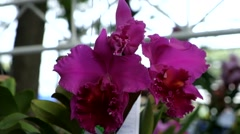 Orchid on the nature Stock Footage