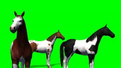 Group of horses - green screen Stock Footage
