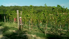 Children playing at the vineyard. Stock Footage