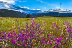 Indian paintbrush flowers colorado landscape Stock Photos