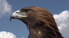 Bird of Prey in Profile Stock Footage