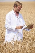 Scientist with digital tablet examining wheat crop in field Stock Photos