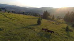 Aerial footage. Horses standing on a field on a background of mountains Stock Footage