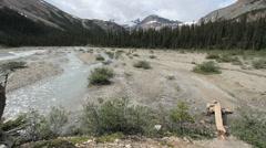 Canada Alberta Banff Bow Falls stream man crosses on log 20 Stock Footage