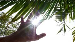Hand to Sun through Palm Leaves. Slow Motion. Stock Footage