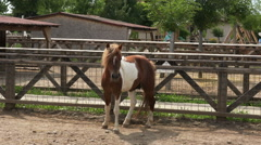 pony in captivity - stock footage