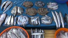 Fresh fish, prawns and squids in metal plate - market in Kochi, India Stock Footage