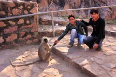 young local men feeding gray langur at ranthambore fort, india - stock photo