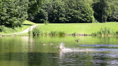 Flock of ducks and geese resting on the pond in park. Stock Footage