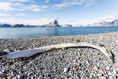 Arctic landscape with very old whale bones on the beach Stock Photos