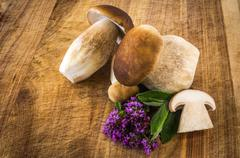 boletus edulis - stock photo