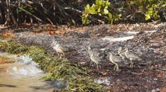 Florida Shorebirds Stock Footage