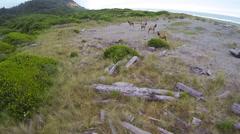 Running Elk Aerial Stock Footage