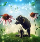 Black dog in a fantasy hilltop with echinacea flowers Stock Photos