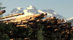 British Columbia Revelstoke logs close up Stock Footage