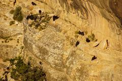 Turkey vultures on canyon cliffs Stock Photos