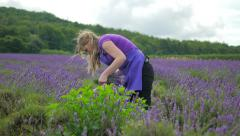 Woman Cutting Lavender Stems Stock Footage