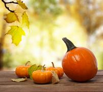 squashes and pumpkins on shinning fall background - stock photo