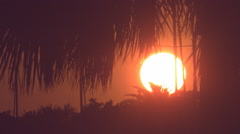 Sunset Palm Tree Silhouette Blowing in the Wind in Super Slow Motion Stock Footage