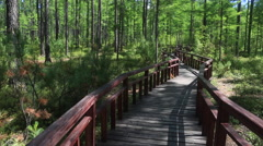 Pan shot of the boardwalk through pine trees under blue sky - stock footage