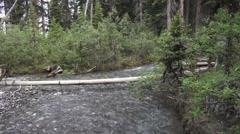 Canada Jasper NP stream in forest flows under log s Stock Footage