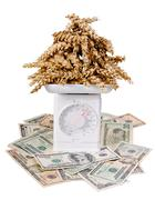 corn on the kitchen scale with dollars - stock photo