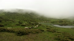 Shepherd driving a flock of sheep high into the mountains by the lake Stock Footage