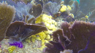 Stock Video Footage of Coral Barrier Reef in the Florida Keys