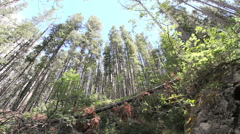 Canadian Rockies forest Stock Footage
