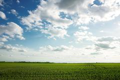 landscape og green corn feld - stock photo