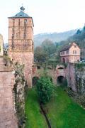 the tree in the ruin tower of heidelberg castle in heidelberg - stock photo