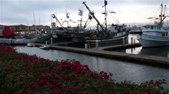 Boats resting in the evening harbor with beautiful bougainvillea flowers blowing Stock Footage