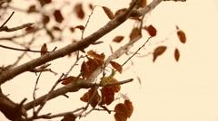 Vintage moving autumn leaves Stock Footage