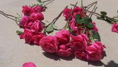 Pink Roses Drop Slow Motion Stock Footage