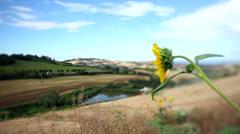Sunflowers and threshing. Stock Footage