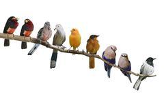 birds perching - stock photo