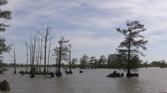 Louisiana cypress trees in water cx Stock Footage