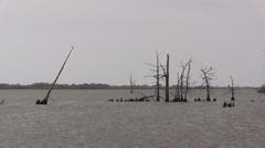 Louisiana dead cypress trees in water cx Stock Footage