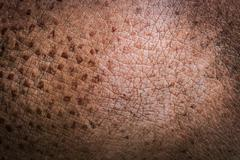 animal skin texture hippo state thomas - stock photo