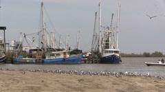 Louisiana shrimp boats and birds with small boat cx Stock Footage