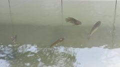 Fish swimming in water Stock Footage