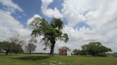 A live oak tree and a plantation house in Louisiana Stock Footage